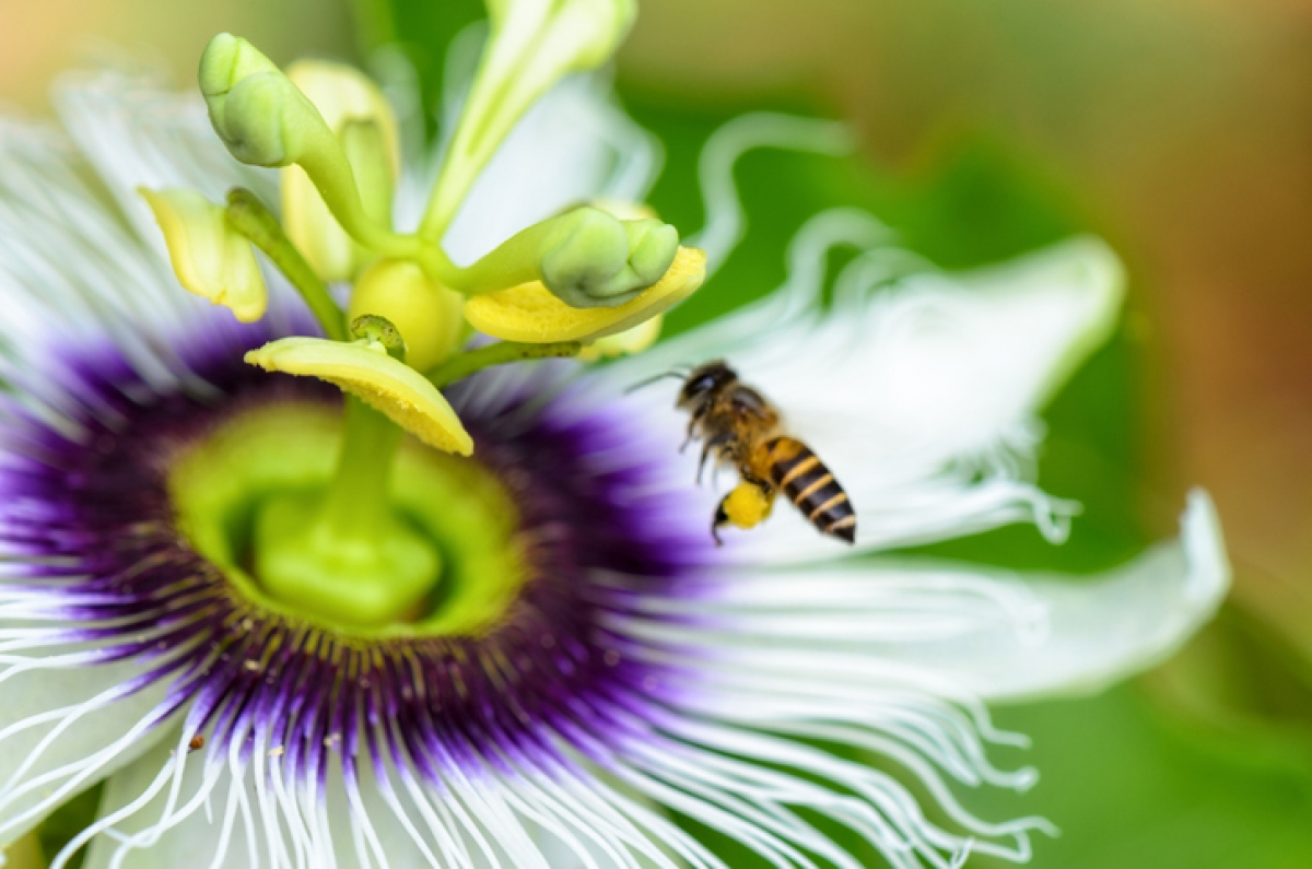 Threat to Bee Population The Green Parent